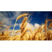 Ferma agricola 500 ha de la Investments Romania