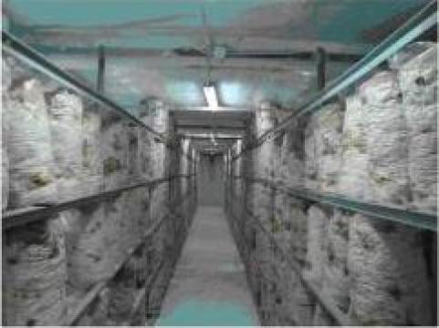 Ferma legumicola-ciupercarii