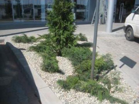 Amenajare alveole cu plante, folie antiburuieni si pietris de la Special Garden Srl
