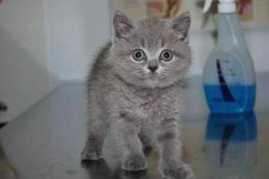 Analize de laborator veterinare biochimic si hematologic