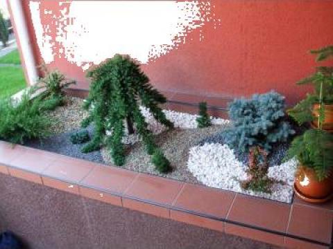 Aranjament gradina mini cu plante