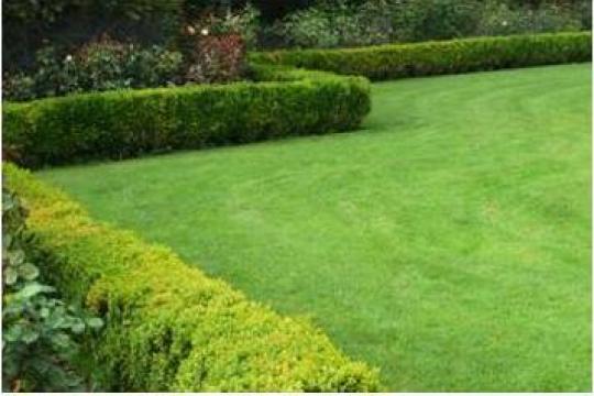 Amenajare spatiu verde cu rulouri gazon Timisoara de la Walter Garten