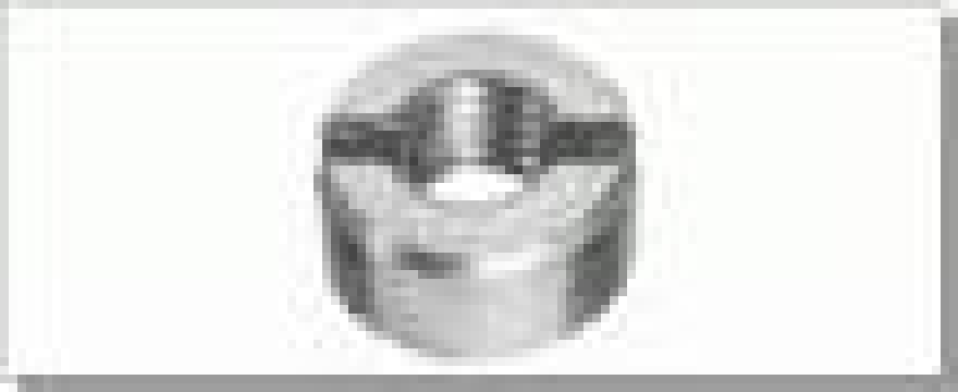Piulita cilindrica, crestata