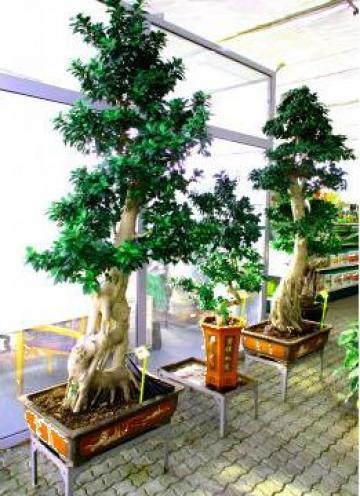Plante exotice