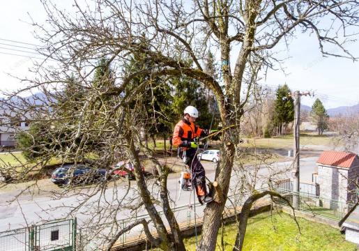 Toaletare copaci, toaletare arbori de la Spideralpin Rope Srl