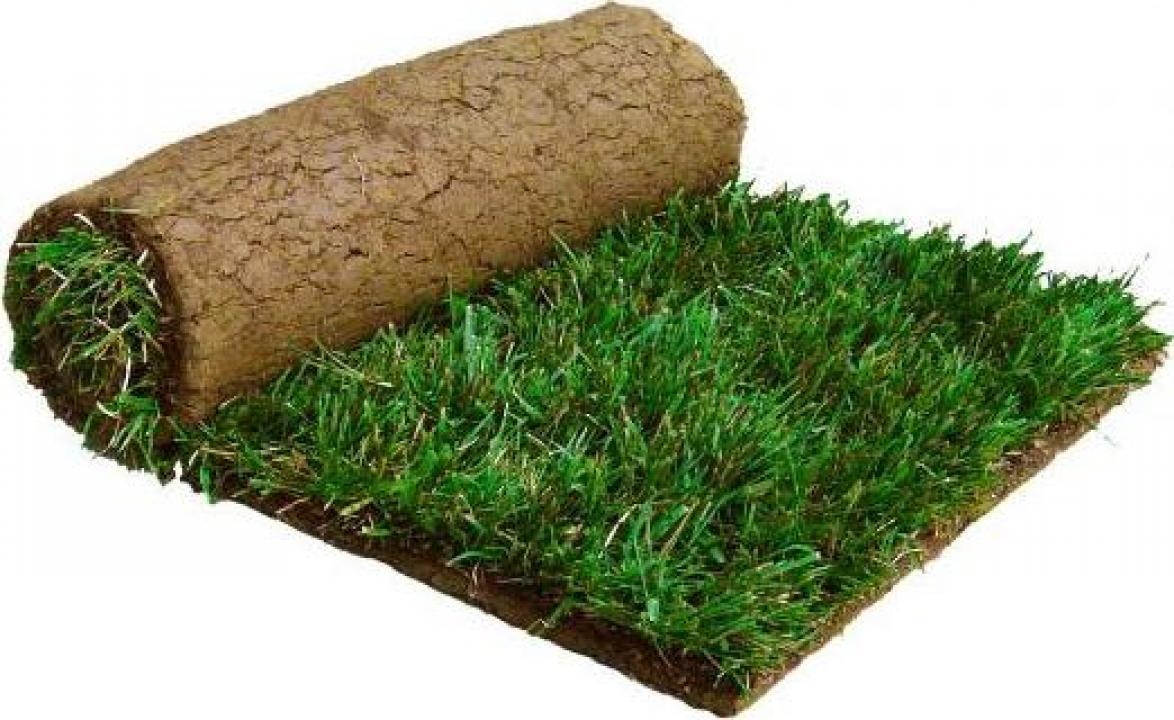 Rulouri de gazon, Grass Farm, super sport, 1 palet 50 mp